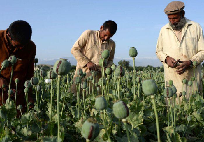 صادرات مواد مخدر از افغانستان به تاجیکستان کاهش یافته است
