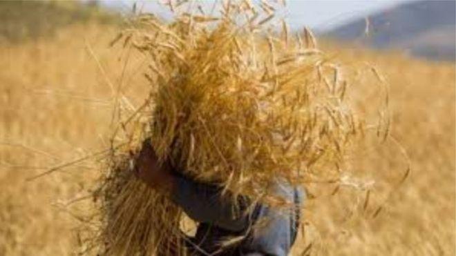 نگرانی مسئولان افغانستان از قاچاق گندم به پاکستان