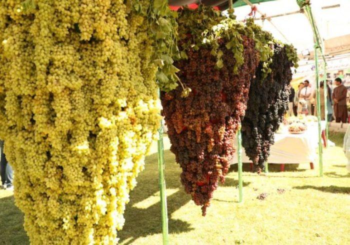 تلاش وزارت زراعت برای گسترش باغهای تجارتی در کشور