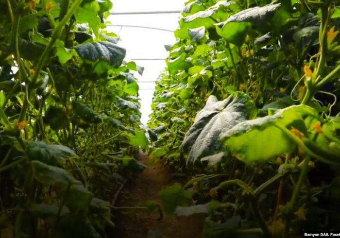 وزارت زراعت: ۸۸ سبزخانه در ننگرهار ساخته میشود