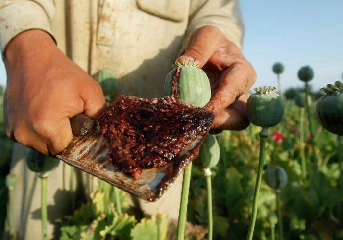 سازمان ملل: بحران کرونا تهدید مواد مخدر افغانستان را کمتر نکرد