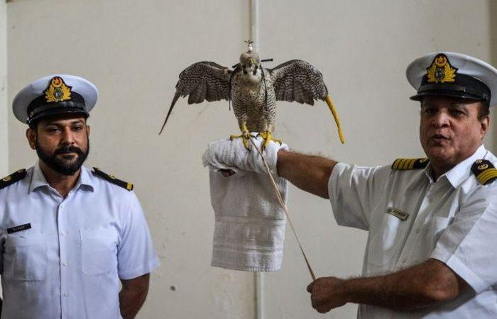 از قاچاق ۷۵ شاهین کمیاب افغانستان به کشورهای عربی جلوگیری کرد