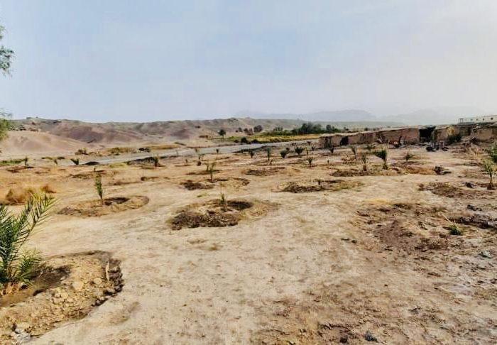 باغ تجارتی«خُرما» در ولایت نیمروز احداث میشود
